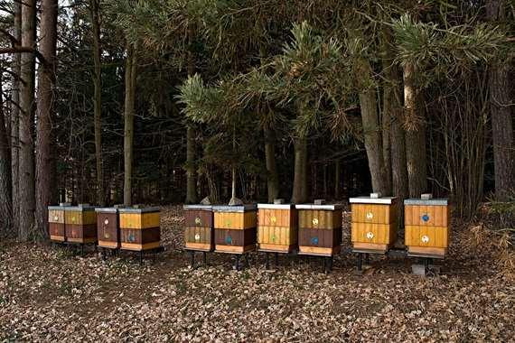 علاجات عسل الغابات السوداء العضوي في الأمراض المعاصرة