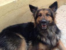 كلب مسعور يعقر 12 شخصًا في قرية سبرباى بطنطا