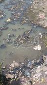 بالصور.. بوار الأراضي الزراعية بسبب نقص مياه الري بالبحيرة