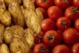 البطاطس والطماطم