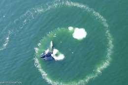 صيد الحيتان