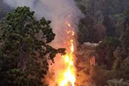 حريق حديقة الحيوان
