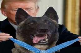 ترامب يكرم الكلب المصاب في اغتيال البغدادي