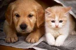 قطط وكلاب