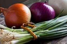انواع البصل