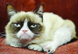 """سر """"القطة العابسة"""" الأغنى من رونالدو!"""