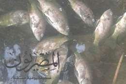 نفوق الاسماك بأعداد كبيرة فى مياه النيل ببسيون وكفرالزيات