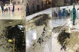 غزو صراصير الحرم المكي