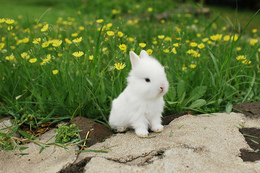 """تحذير عاجل لصاحبة رؤيا """"الأرنبة"""""""