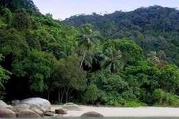 جزيرة القرود