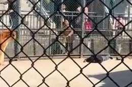 فيديو يرصد اللحظات الأخيرة لحارس قتله نمر