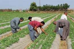 صورة أرشيفية للمزارعين