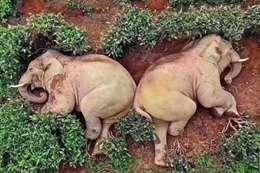 الكيف في زمن كورونا.. 14 فيلا في حالة سكر