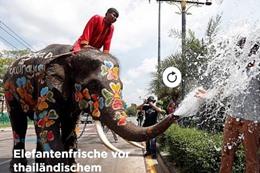 مهرجان رش المياه بالافيال في تايلاند