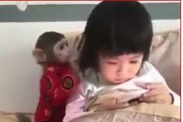 الطفلة والقرد