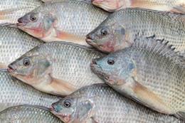 صورة سمك