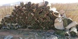 إحباط تهريب 2.3 طن بانجو بشاطئ خليج السويس