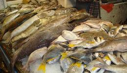 مصادرة طن إلا ربع أسماك فاسدة بالإسكندرية