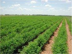 تخصيص أراضي زراعية لإقامة مشروعات عامة
