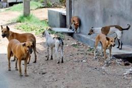 الحكومة تُلاحق الكلاب في رمضان