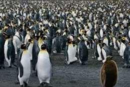 """دراسة تكشف مفاجأة عن """" براز البطريق"""""""