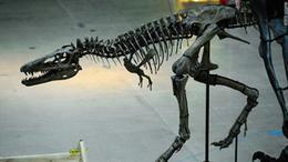 اكتشاف نادر.. بقايا ديناصور في السعودية