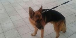 مطاردة كلب بمطار القاهرة
