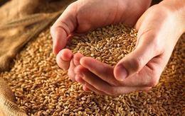 """قرارات جديدة على وقع أزمة """"فساد القمح"""""""
