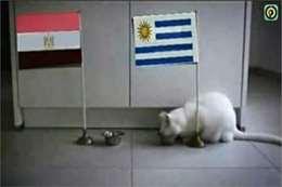 القط أخيل