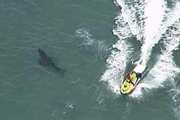 سمكة قرش بطول 3 أمتار تقتل راكب أمواج