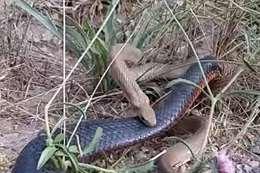 روايات مرعبة بسبب ظهور ثعابين ضخمة بالقليوبية