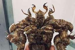طالب ياباني يصنع تماثيل من الحشرات الحية!