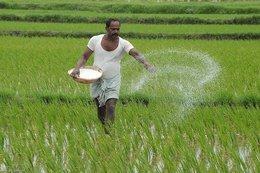 زراعة الأرز.. تبوير ومياه صرف وغرامات حكومية