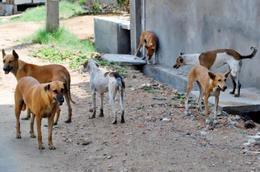 الكلاب الضالة تهاجم أهالي القطامية