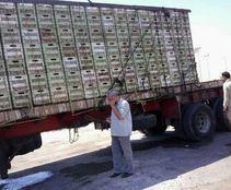 ضبط 20 طن طماطم فاسدة مهربة لطرحها بالأسواق ببنى سويف