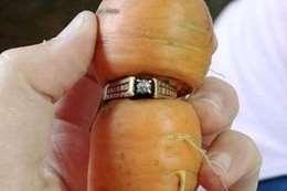 الجزرة التى عثر بداخلها  على الخاتم