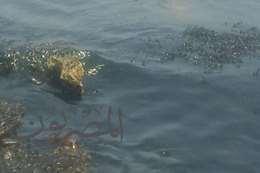صورة كسر خط بترول  مختلط بمياه البحر شمال الغردقة