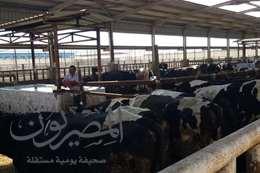 محطة تربية الماشية