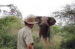 رحال يواجه فيل