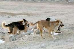 كلاب ضالة تهاجم فتاة