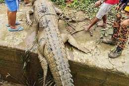 صور.. العثور على بقايا طفل مفقود داخل بطن تمساح