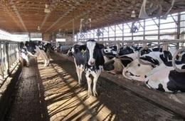 إغلاق أسواق الماشية بسبب الحمى القلاعية بالمنوفية