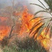 النيابة تطلب جمع الأدلة الجنائية في حريق مزرعة أشجار زيتون بأبو رواش