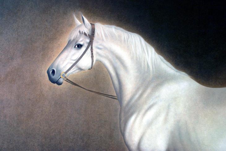 رايحين مكة على حصان أبيض
