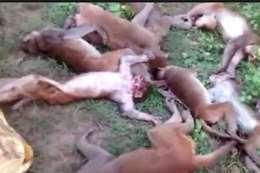 وفاة 12قرد
