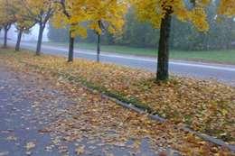 بدء فصل الخريف غدا