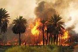 حريق بنخيل الدقيرة جنوب الأقصر