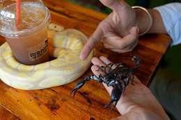 مقهى يقدم مشروباته للزبائن وسط الثعابين والعقارب
