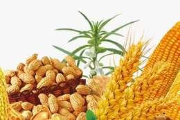 القمح والذرة والأرز والصويا