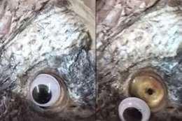 شاهد.. عمليات تجميل للأسماك تغلق محلا شهيرا